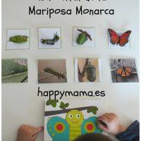 Ciclo vital mariposa monarca