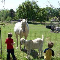 Establecer lazos con animales